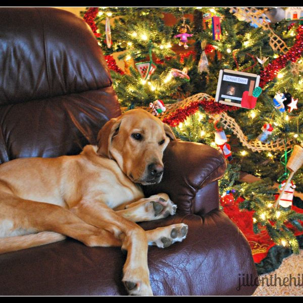 Bella…Our Therapy Dog