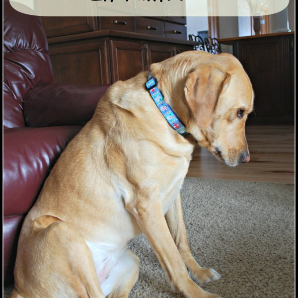 Is your dog in pain??