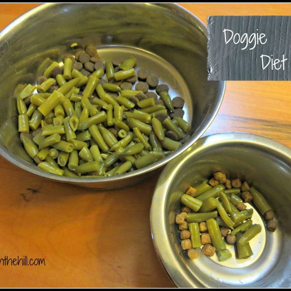 Doggie Diet