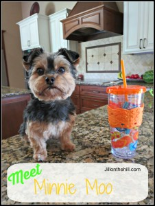 Meet Minnie Moo!