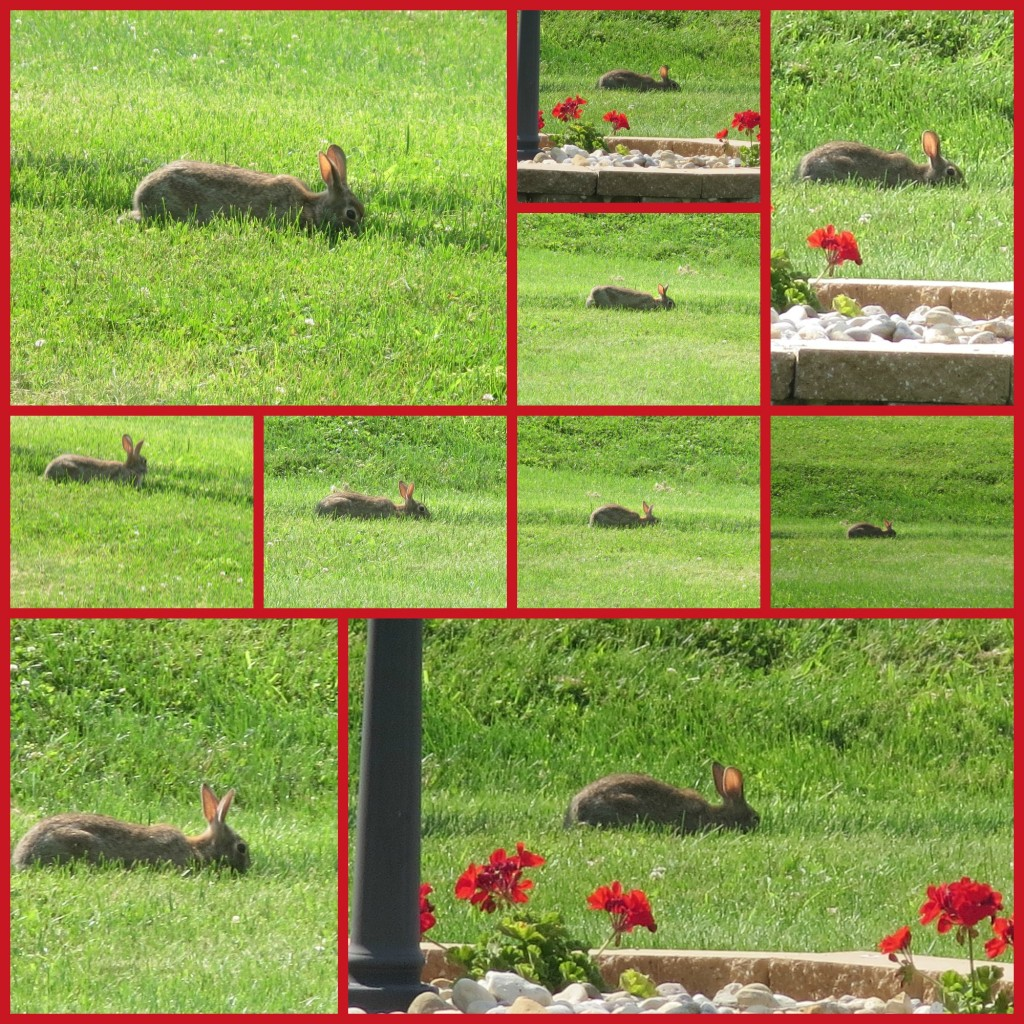 PicMonkey Collage-bunny