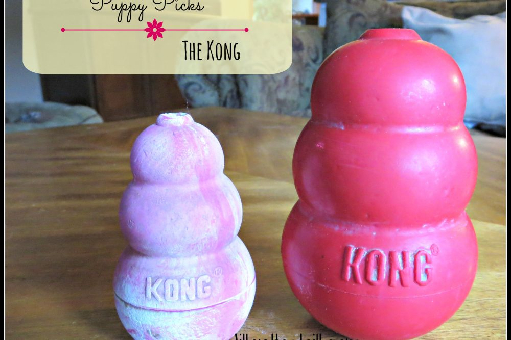 Puppy Picks- The Kong