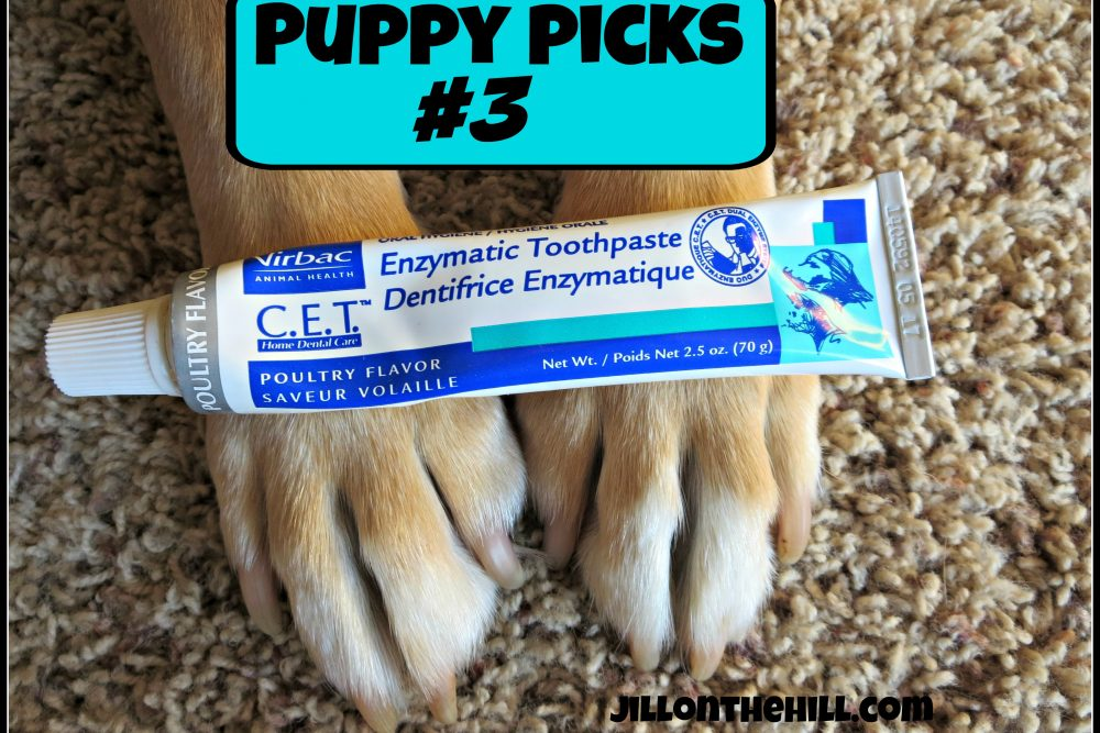 Puppy Picks #3