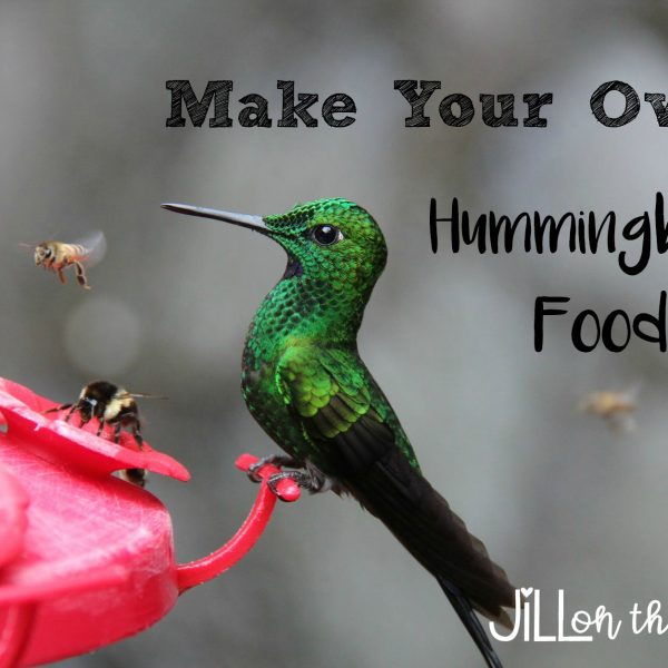 Make your own Hummingbird Food